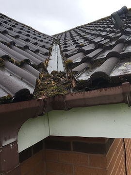 Gutters needing cleaned