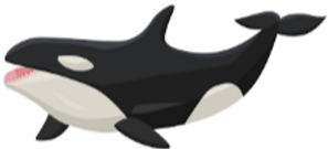 ORCA WITH TEETH.png
