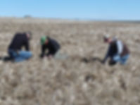 People in a field with residue from direct seed farming