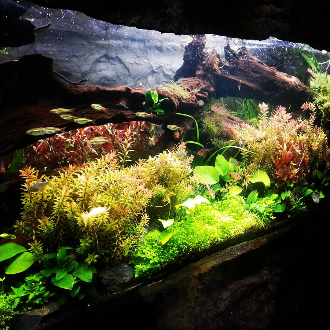 Art of Aquascaping1