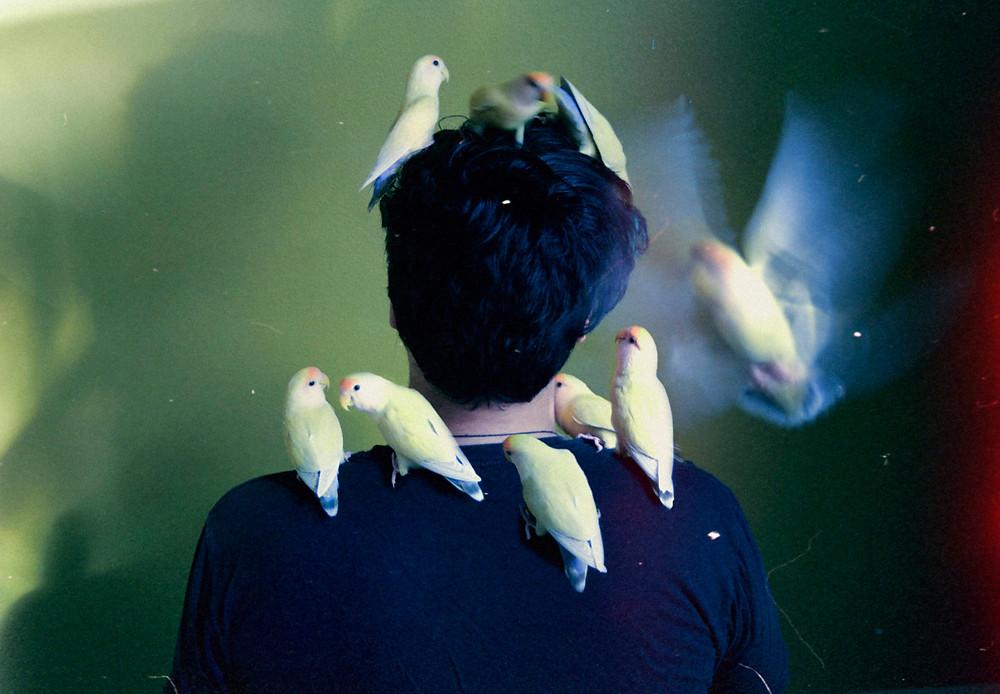 birds palo