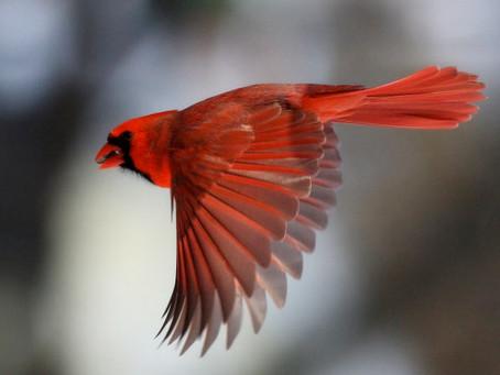 this bird has flown