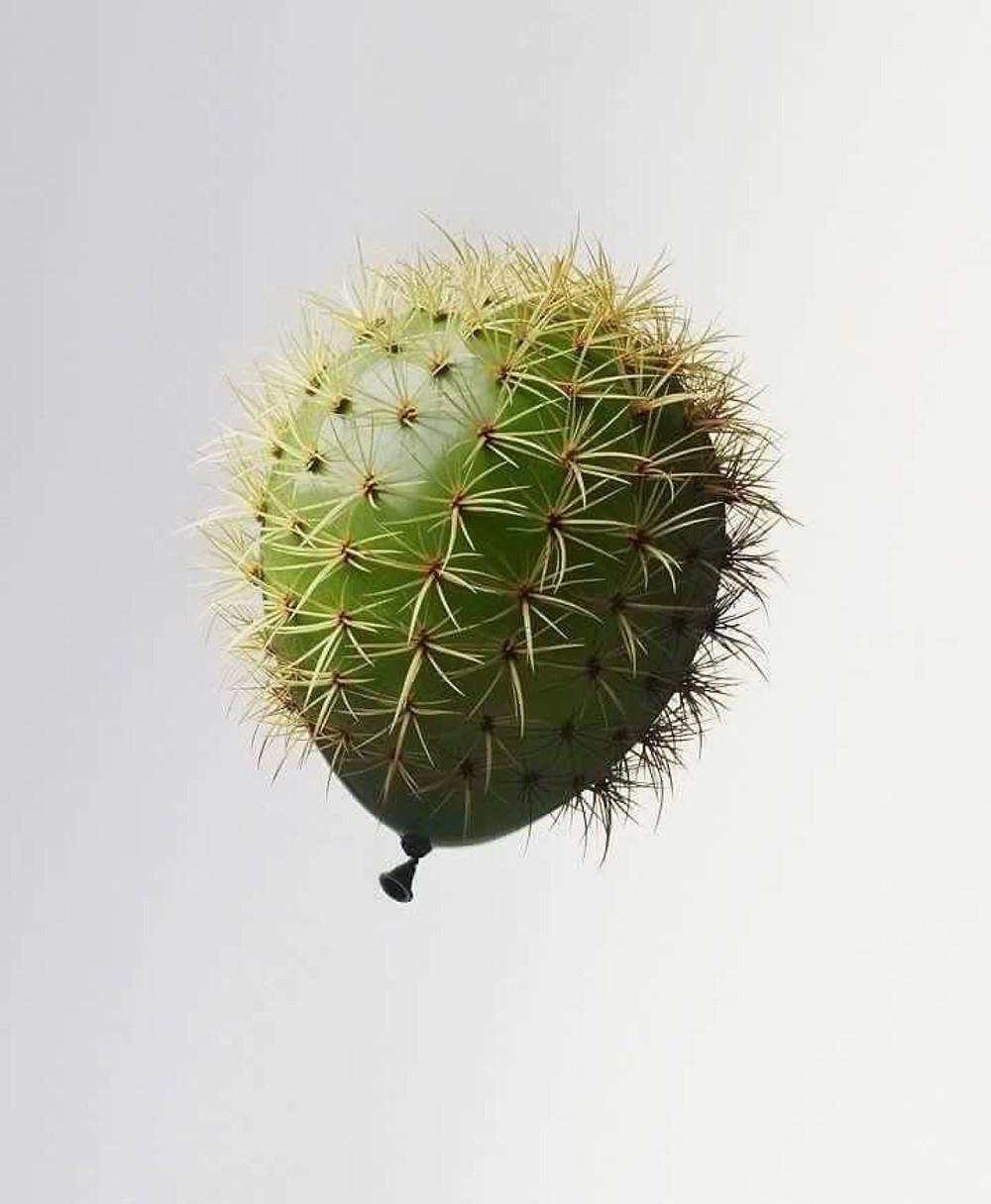 prickly balloon