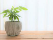 オフィス・店舗の観葉植物