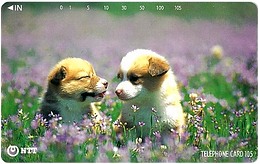 テレホンカード子犬