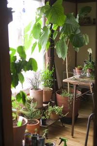 観葉植物溢れる癒しの空間へ
