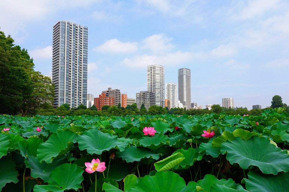 台東区風景