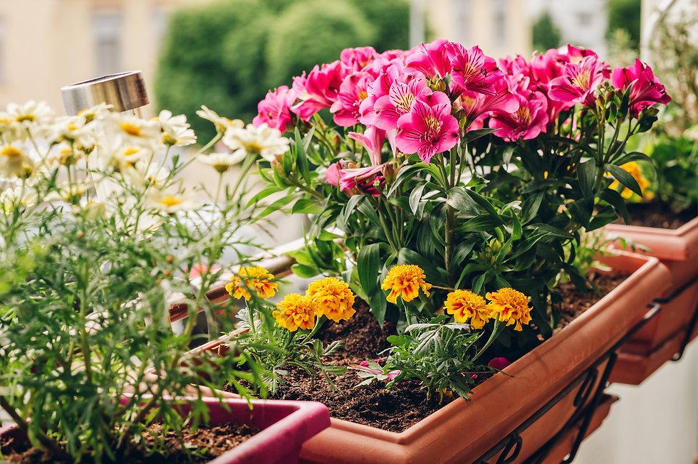 寄せ植え鉢イメージ