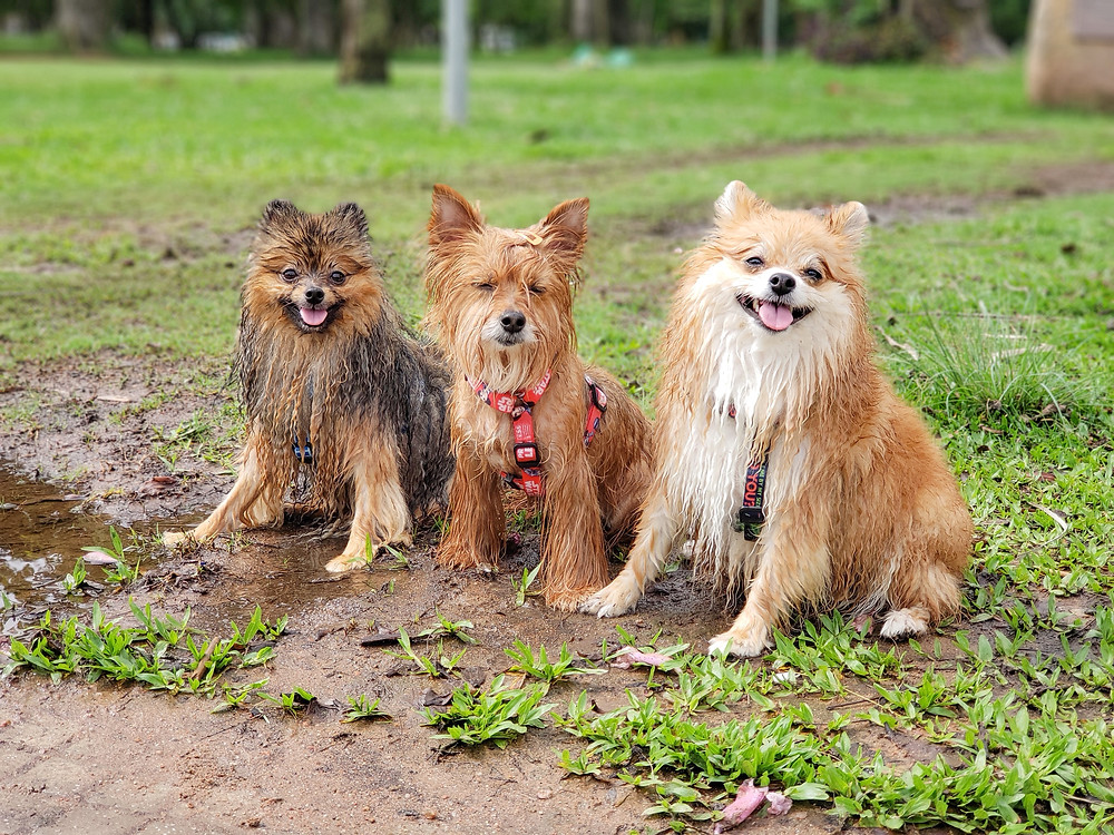 Duff, Larah e John John (JJ) - @sweetthree/Foto: Priscila Blehm