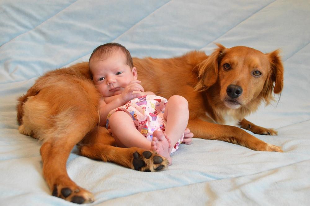cão companheiro