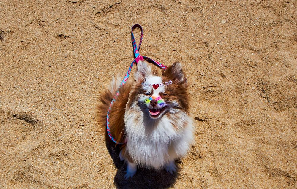 Cachorrinha Meg foto: Rafaela Osório