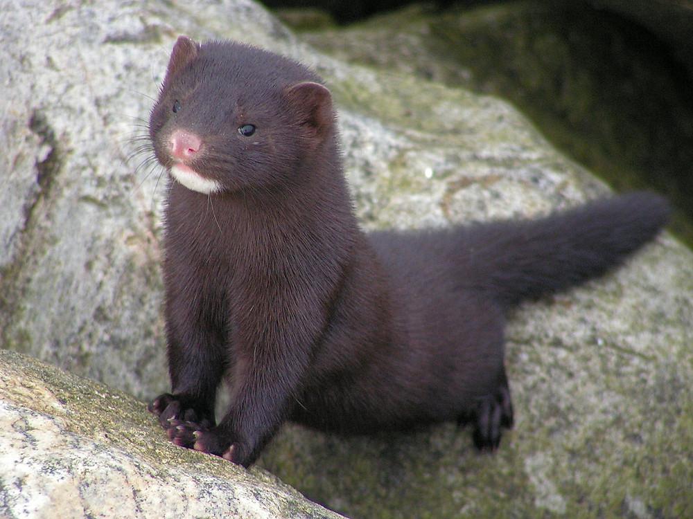 diga não aos cilios de mink