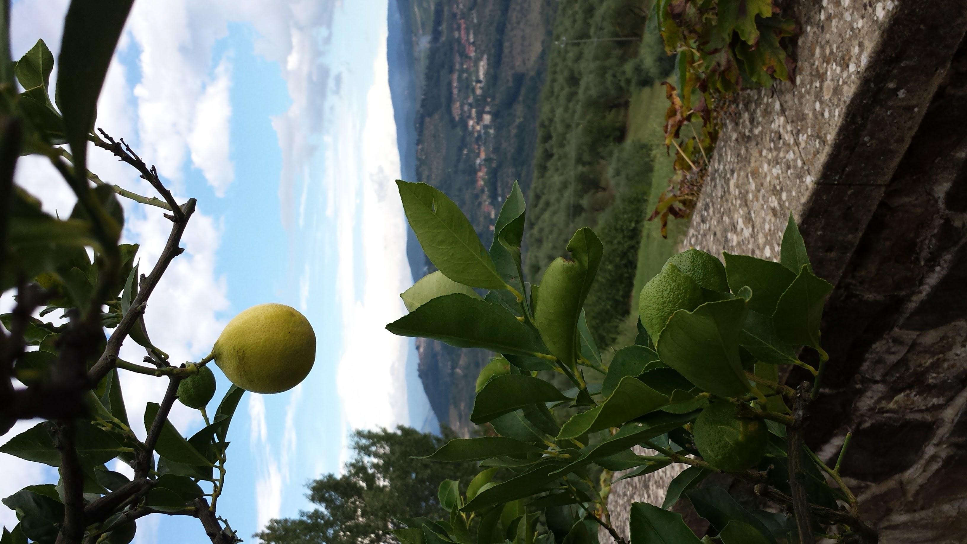 LemonChianti