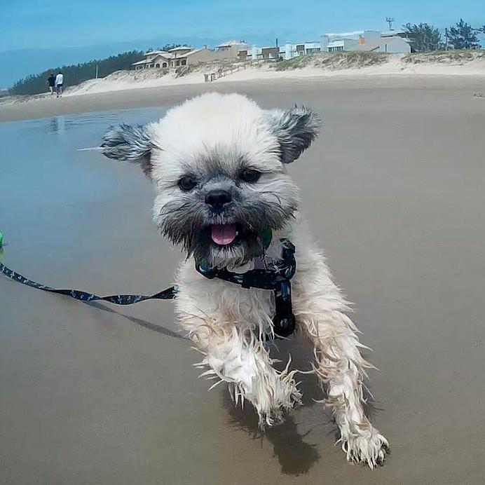 Cão correndo na praia