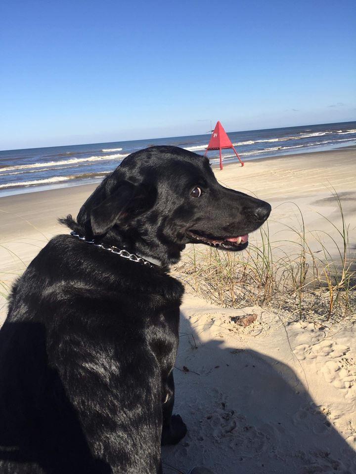 Cão Polho