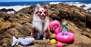 Pets também curtem o verão?