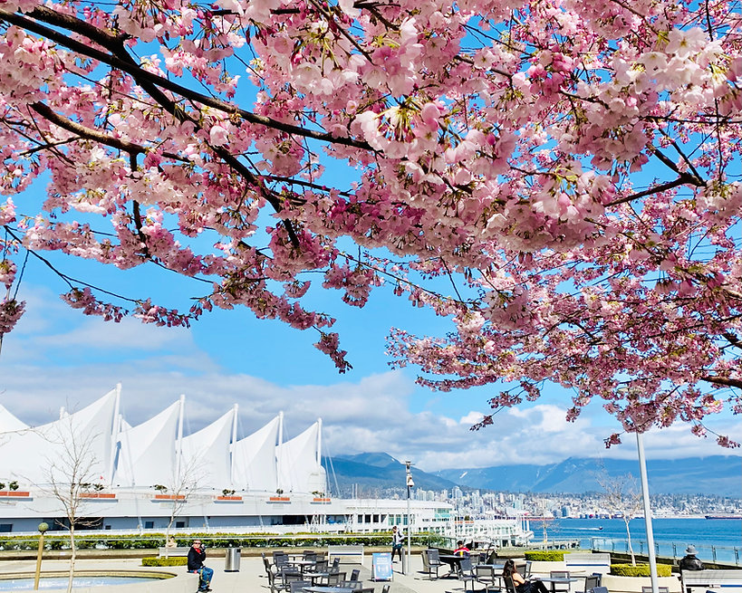 Canada Place with cherry blossoms (002).