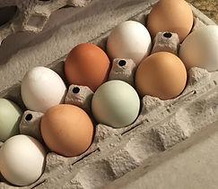 Eggs .jpeg