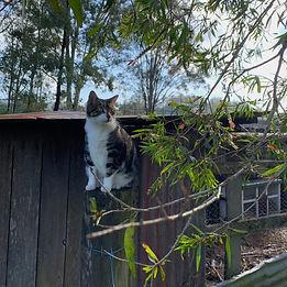 Moggie at Meandering Farm Girvan NSW .jp
