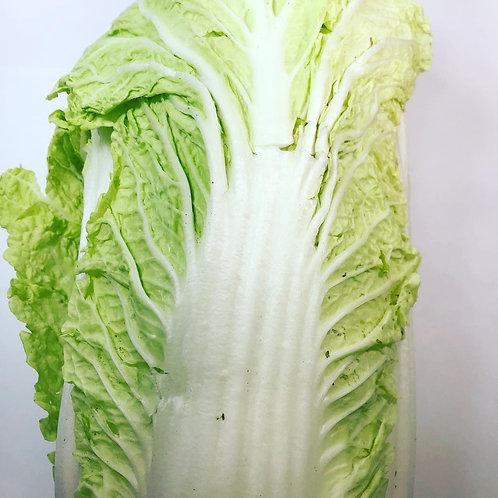 Nappa - Chinese Cabbage