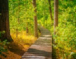 Image of boarwalk in the woods.