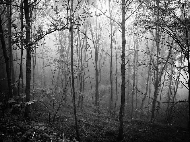 La forêt-2.jpg