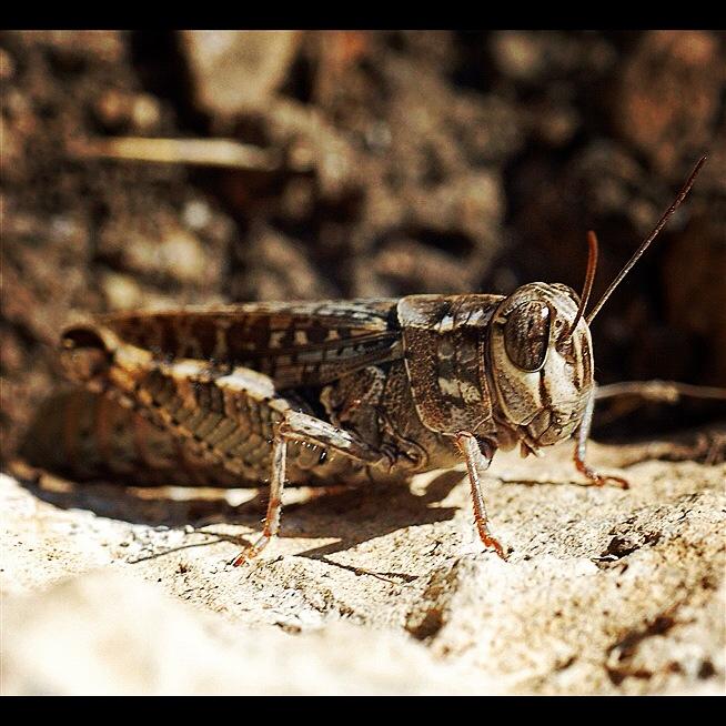 Closeup buglife