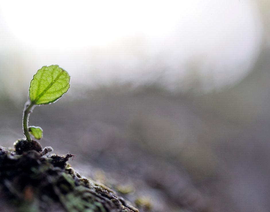 leaf background.jpg