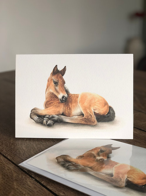 'Alfie' Greetings Card