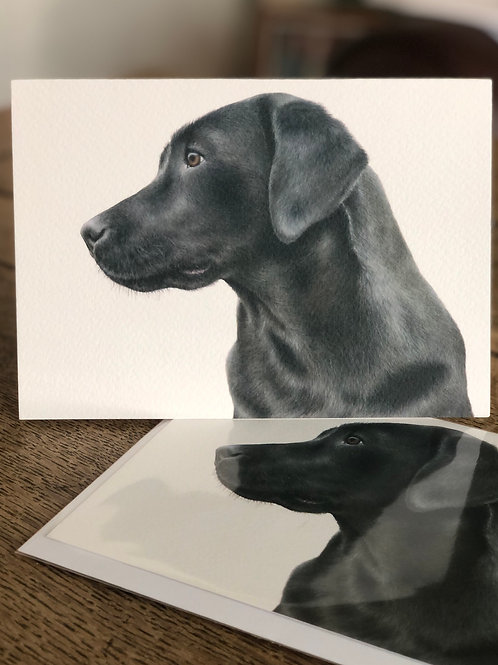 'Labrador Study' Greetings Card