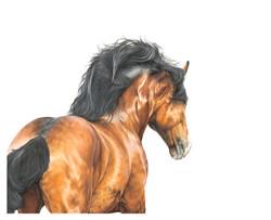 950'Horse Power' £1800