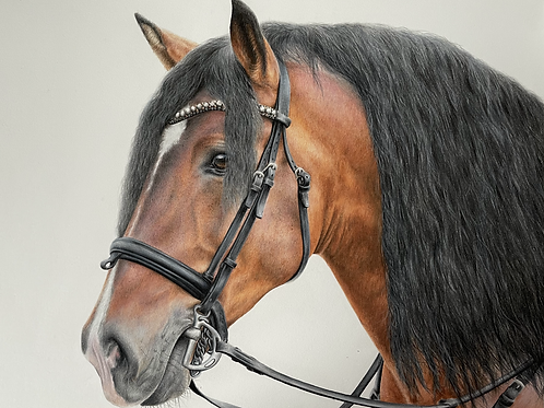 Bay Horse Study