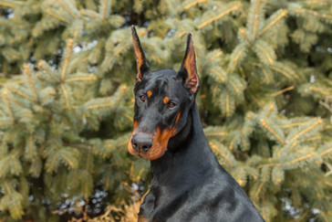 Draco 9 months