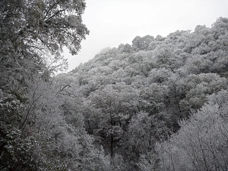 Un día en  la   nieve.