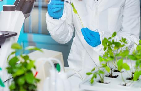 Bitkilere Gen Nasıl Aktarılır?