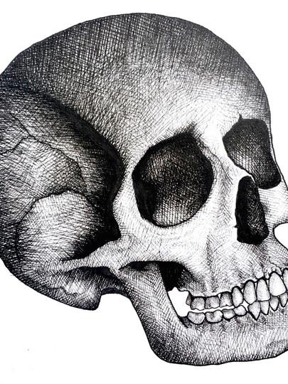 Skull Study - 2017