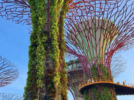 10 Best Things to Do and See in Singapore