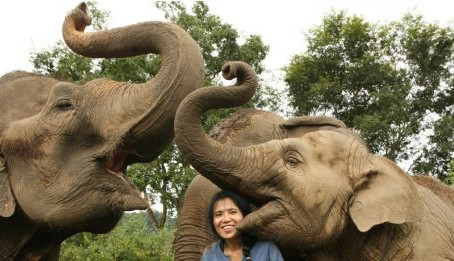 Say NO To Elephant Rides: Why You Need to Visit Elephant Nature Park