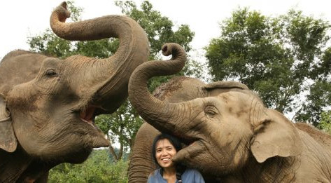 Say NO To Elephant Rides: Reasons to Visit Elephant Nature Park