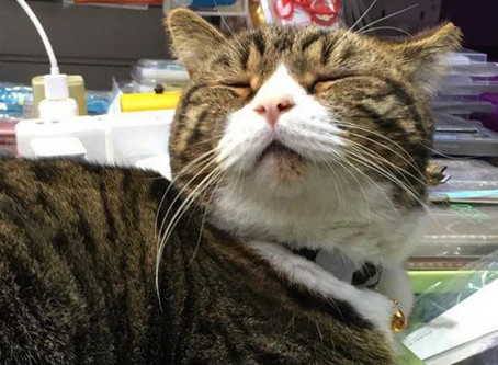 An Ode To Our Favourite Cuddly Hong Kong Shop Cats