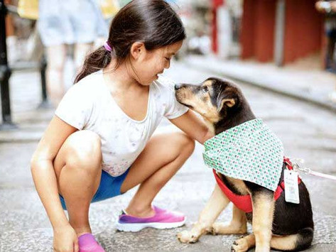 Things You Need to Consider Before Adopting a Dog