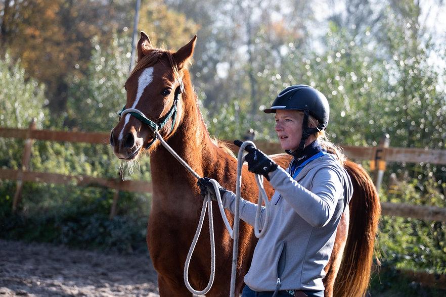 2Moons Breukelenhof Jonge Paarden Opvoed