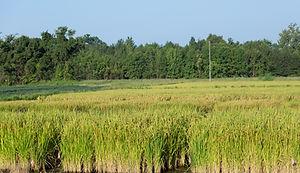 Shoffner Farm 8-24-20 (48).jpg