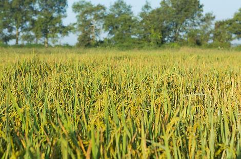 Shoffner Farm 8-24-20 (8).jpg