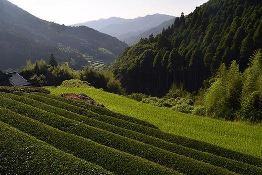 Rural tours of Japan, Kyushu