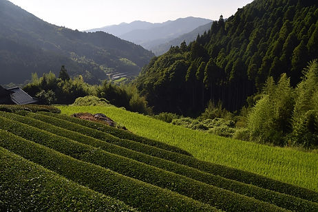 Kyushu countryside.jpg