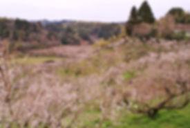 DSC01918_cropped.jpg