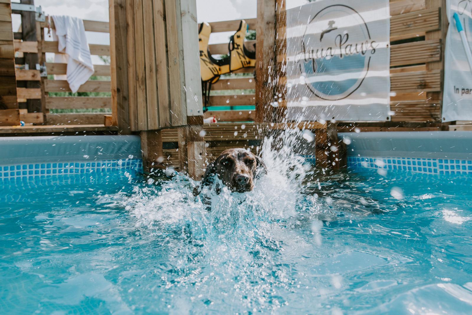 AquaPaws (1 Dog) Private Lesson (30min)