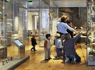 museum-histoire-naturelle-de-la-rochelle