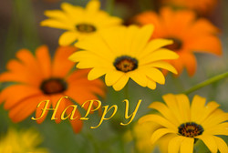 HAPPY AFRICAN DAISY REV1